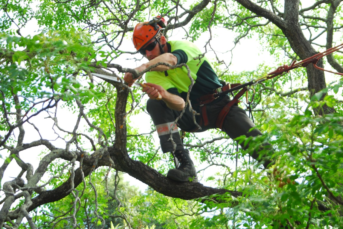 Prune your trees on a regular basis